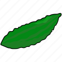 cucumber, salad, vegetable icon