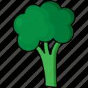 cauli flower, food, vegetable icon