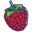berries, berry, fruit, fruits, healthy food, raspberries, raspberry icon