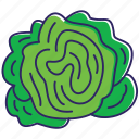 green salat, healthy food, lettuce, nature, organic, vegetable, vegetables icon