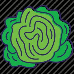 green salat, healthy food, lettuce, nature, organic, vegetable, vegetables icon