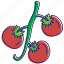 cherry tomato, healthy food, organic, tomato, tomatoes, vegetable, vegetables icon