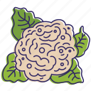 cauliflower, eco, food, nature, vegetable, vegetables icon