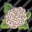 cauliflower, eco, food, nature, vegetable, vegetables icon