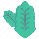 leaf, leave, nature, oak, salad icon