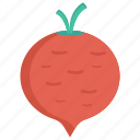 eat, food, turnip, vegetable, vegetaian icon