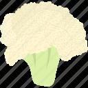 broccoli, cauliflower, diet, flat, food, fresh, green