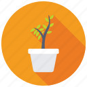 flowering plant, houseplant, indoor plants, nature, potted plant icon