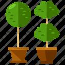 plants, furnishings, furniture, interior, nature, plant