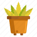 aloe, aloe vera, plant, pot, vera