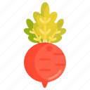beet, beetroot, vege, vegetables icon