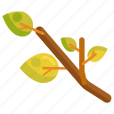 branch, tree branch icon