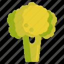 broccoli, vege, vegetables icon