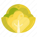 cabbage, vege, vegetables icon