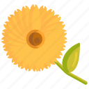 calendula, floral, flower icon