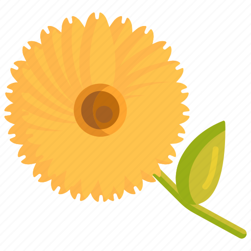 Calendula, floral, flower icon - Download on Iconfinder