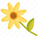 daisies, daisy, floral, flower icon