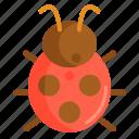 bug, insect, lady, ladybug