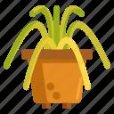 plant, spider, spider plant icon