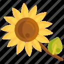 floral, flower, sunflower icon
