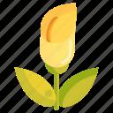 floral, flower, nature, plant, zantedeschia icon