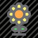 agriculture, farming, flower, gardening, nature, plant, sunflower