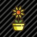 calendula, flower, plant