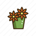 daisies, daisy, flower, flowers, pot