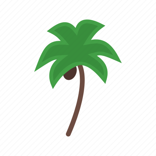 beach, coconut, palm, summer, tree, trees, tropical icon