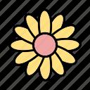 daisy, flower, garden
