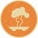 bonsai, plant, tree icon