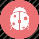 error, ladybird, virus icon