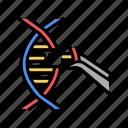 modification, construction, genetic, molecule, engineering, animal