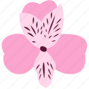 alstroemeria, flower, decoration, floral, nature, plant