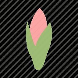 amaryllis, bud, decoration, floral, flower, nature icon