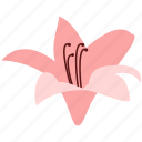 amaryllis, decoration, floral, flower, nature, plant icon