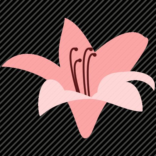 amaryllis, decoration, floral, flower, nature, plant icon