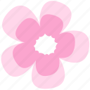 flower, geranium, decoration, floral, nature