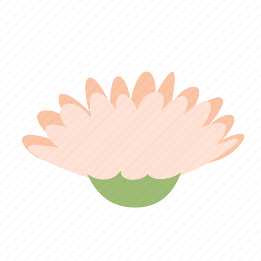 blossom, daisy, decoration, floral, flower, gerbera, nature icon