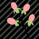 berries, decoration, floral, flower, hypericum