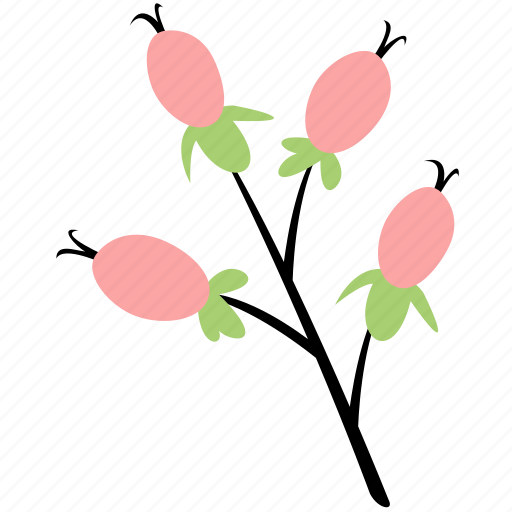 berries, decoration, floral, flower, hypericum icon
