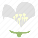 decoration, floral, flower, jasmine, nature icon