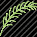 decoration, floral, leaf, nature