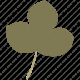 decoration, grape, leaf, nature, plant icon
