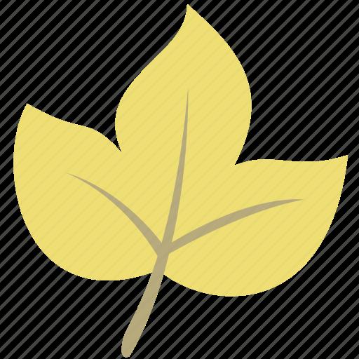 autumn, leaf, maple, nature, plant icon