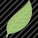 green, leaf, nature, plant
