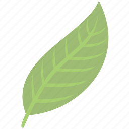 green, leaf, nature, plant icon