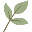 branch, green, leaf, leaves, nature
