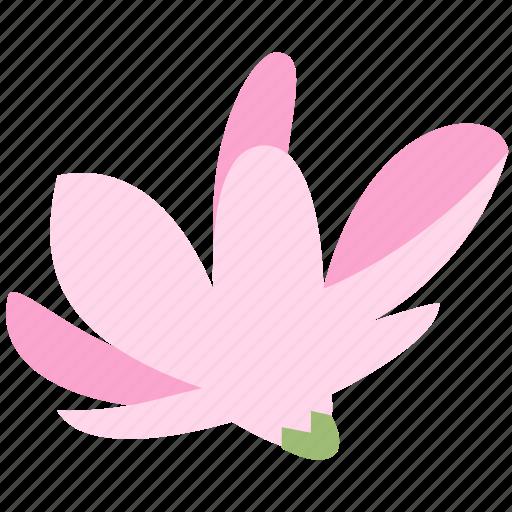 decoration, floral, flower, magnolia, nature, plant icon