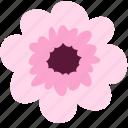 blossom, flower, pink, decoration, floral, nature